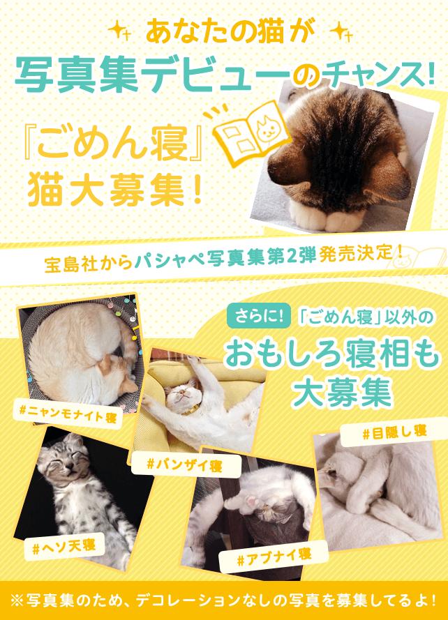 あなたの猫が写真集デビューのチャンス「ごめん寝」猫大募集