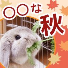 ○○な秋、み〜つけた!