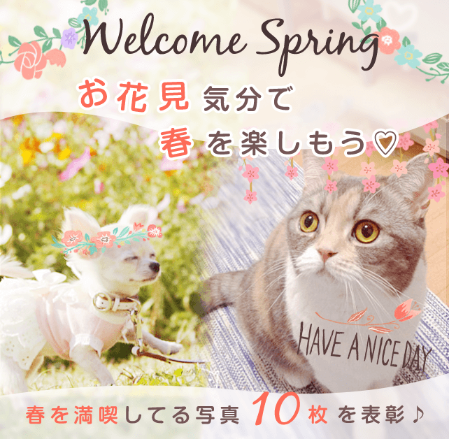 Welcome Spring お花見気分で春を楽しもう♡