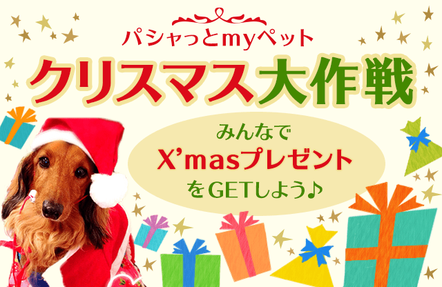 パシャッとmyペット クリスマス大作戦 みんなでX'masプレゼントをGETしよう♪
